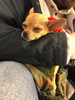 Helmi got tired.